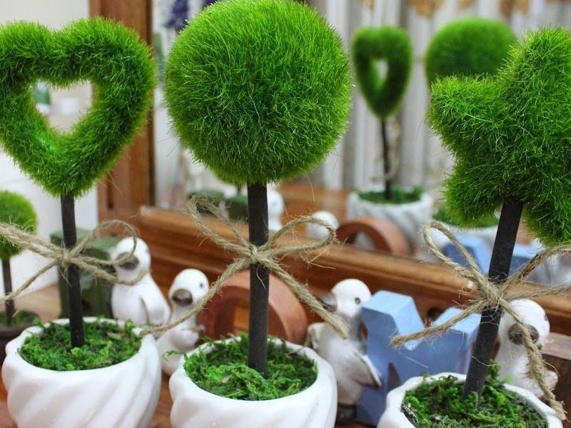 cây xanh trang trí bàn làm việc (2)